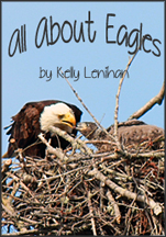 All About Eagles
